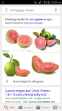 DBSFRUITLINKS PINK GUAVA GROWERS AND SUPPLIERS  Bangalore