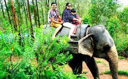 Travel Agent in Kerala Vyttila